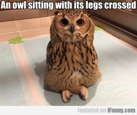An Owl Sitting With Its Legs Crossed