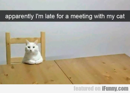 Apparently I'm Late For A Meeting With My Cat...