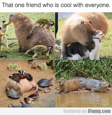 That One Friend Who Is Cool With Everyone...