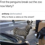 First The Penguins Break Out The Zoo Now Marty