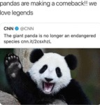Pandas Are Making A Comeback!! We Love Legends