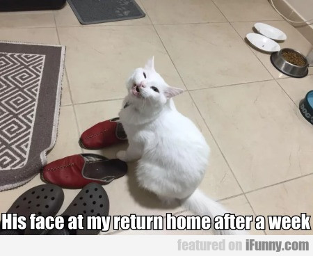 His face at my return home after a week