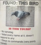 Found This Bird - Is This Yours - No Nametag