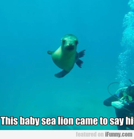 This Baby Sea Lion Came To Say Hi