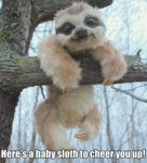 Here's A Baby Sloth To Cheer You Up!