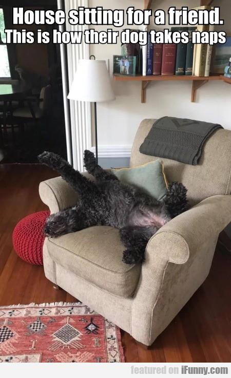 House Sitting For A Friend. This Is How Their...