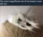 The Most Magnificent Set Of Toe Beans I Ever...