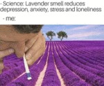 Science - Lavender Smell Reduces Depression...