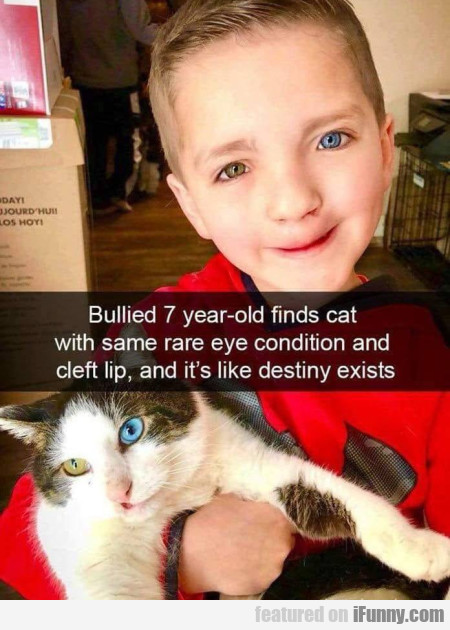 Bullied 7 Year-old Finds Cat With Same Rare Eye...