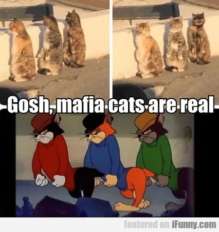 Gosh, Mafia Cats Are Real...