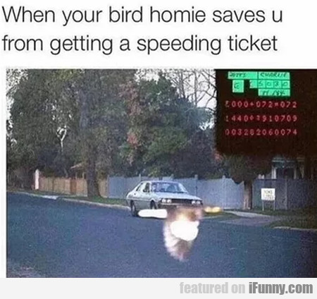 When your bird homie saves u from getting a...