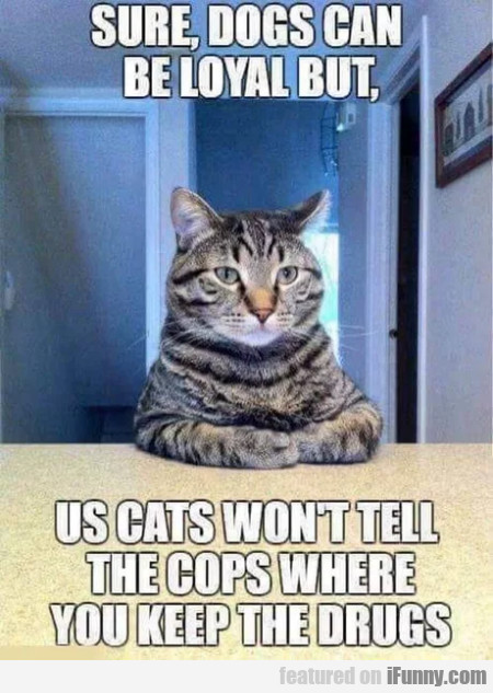 Sure, Dogs Can Be Loyal But, Us Cats Won't Tell...