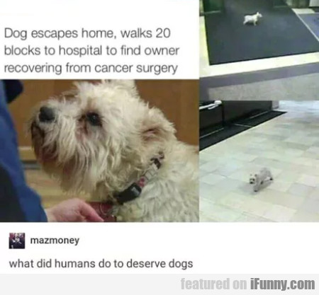 Dog Escapes Home, Walks 20 Blocks To Hospital...