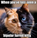 When You've Last Seen A Bipolar Furred Kitty?