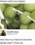 Always Wash You Grapes - And Miss My Chance...