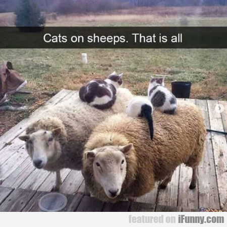 Cats On Sheeps. That Is All...