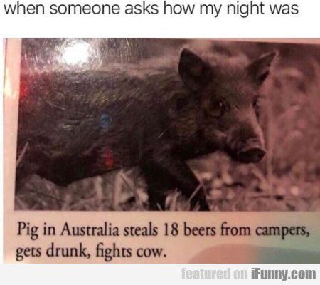 When Someone Asks How My Night Was - Pig In...