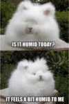 Is It Humid Today? - It Feels A Bit Humid To Me