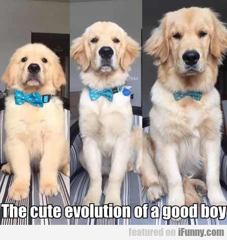 The cute evolution of a good boy