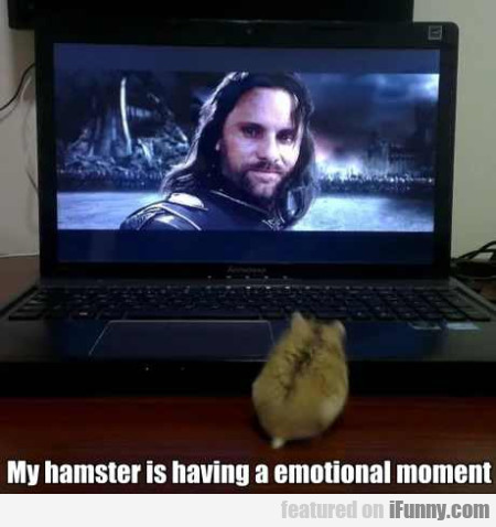 My Hamster Is Having A Emotional Moment