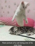 Rare Picture Of A Cat Losing One Of Its Nine...