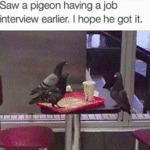Saw A Pigeon Having A Job Interview Earlier...
