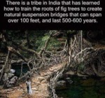 There Is A Tribe In India That Has Leaned How To..