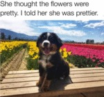 She Thought The Flowers Were Pretty. I Told Her...