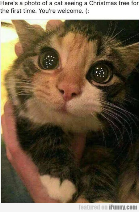 Here's A Photo Of A Cat Seeing A Christmas Tree...