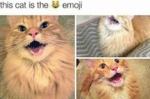This Cat Is The Emoji