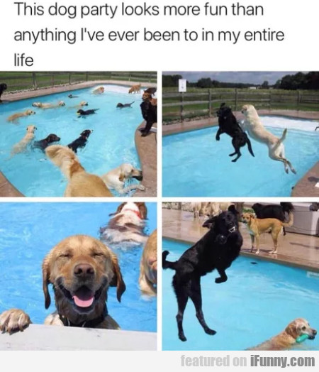 This Dog Party Looks More Fun Than Anything...