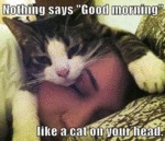 Nothing Says Good Morning Like A Cat On Your...