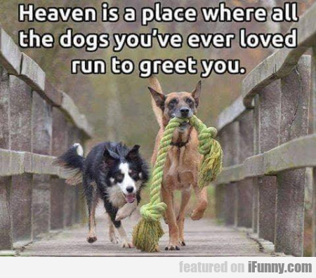 Heaven Is A Place Where All The Dogs...