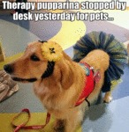 Therapy Pupparina Stopped By Desk Yesterday For...