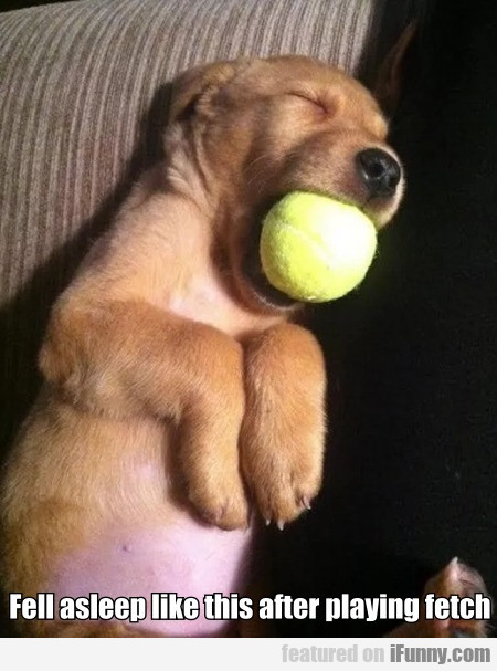 Fell asleep like this after playing fetch...