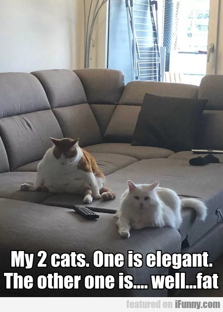 My 2 cats. One is elegant. The other one is...