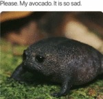 Please. My Avocado. It Is So Sad