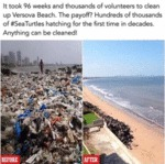 It Took 96 Week And Thousands Of Volunteers To...