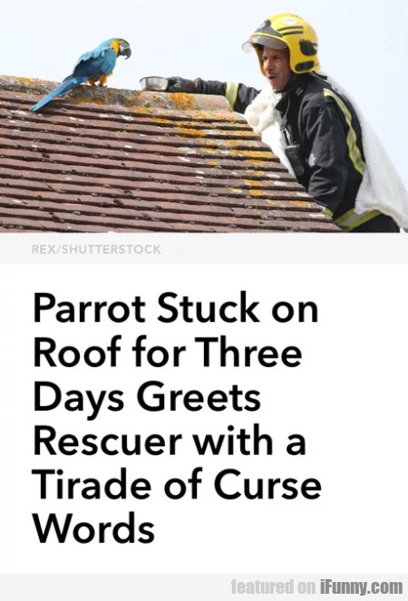 Parrot Stuck On Roof For Three Days Greets...