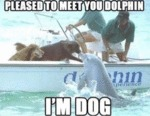 Pleased To Meet You Dolphin - I'm Dog