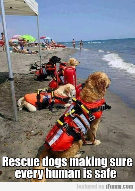 Rescue Dogs Making Sure Every Human Is Safe