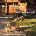 Henlo Mr Forest Boy - What's Up House Wolf