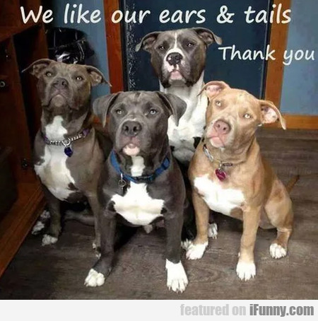 We Like Our Ears & Tails - Thank You