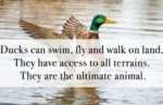Ducks Can Swim, Fly And Walk On Land. They Have...