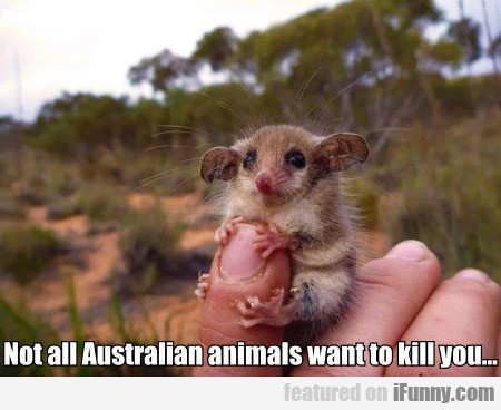 Not All Australian Animals Want To Kill You