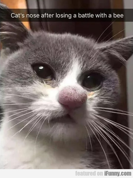 Cat's Nose After Losing A Battle With A Bee...
