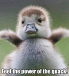 Feel The Power Of The Quack!