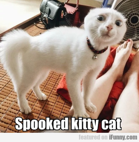 Spooked kitty cat