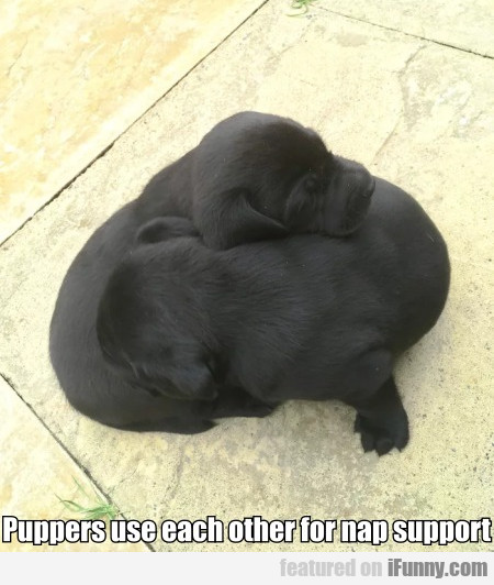 Puppers Use Each Other For Nap Support