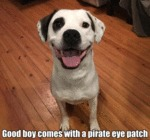 Good Boy Comes With A Pirate Eye Patch